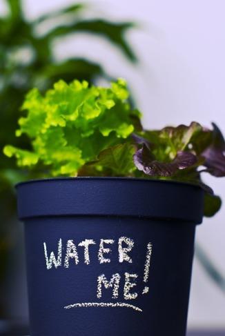 plant-931932_640